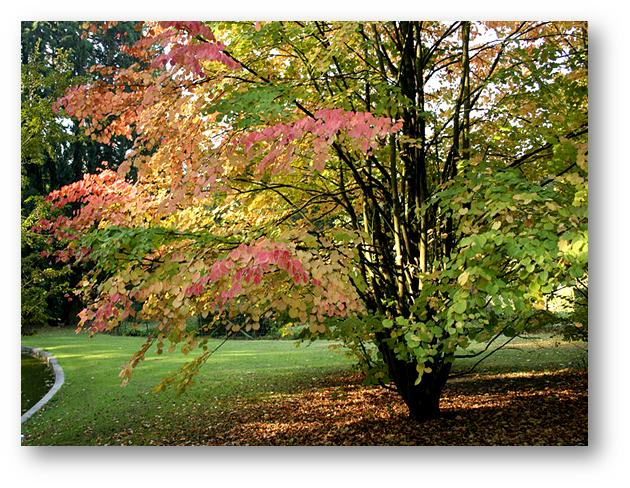 La imagen tiene un atributo ALT vacío; su nombre de archivo es image-46.png