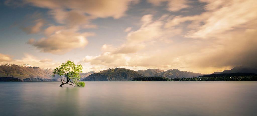 La imagen tiene un atributo ALT vacío; su nombre de archivo es lonely_tree_of_wanaka-by-tom-hall.jpg